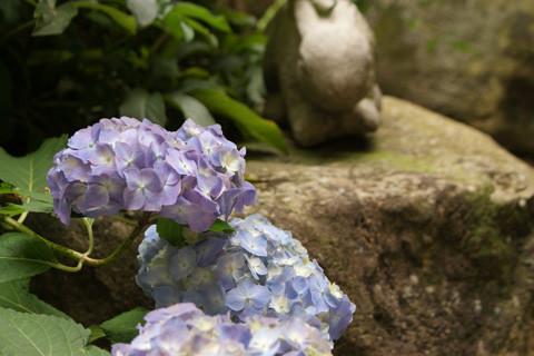 庭で光る小宇宙
